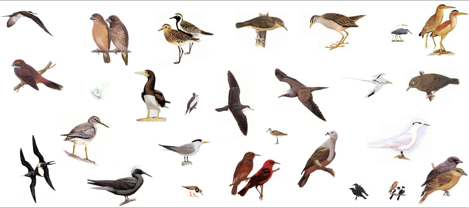 BirdingYapBanner